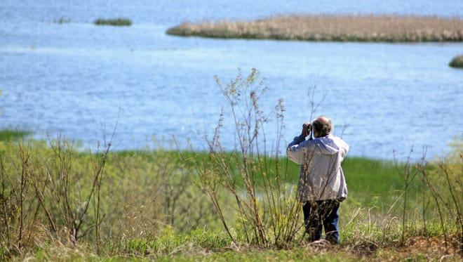 Horicon Marsh is a prime spot for birdwatching, especially in the spring and fall as birds migrate through.