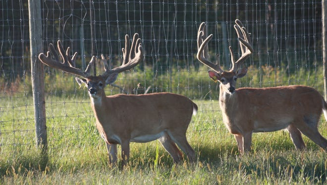 """Laurie Seale says regulatory action gives a """"negative perspective of deer farmers to the public"""" and """"does nothing to stop the disease."""