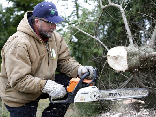 Whispering Pines Tree Farm employee Dean Krzewina cuts pieces from the stump of the balsam fir tree that will be displayed in the White House throughout the Christmas season on November 15, 2016 in Oconto, Wisconsin.