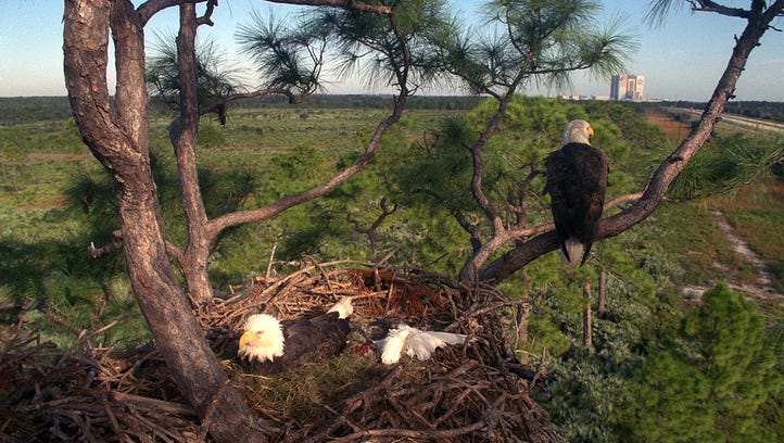 Two bald eagles are seen in their nest near State Road