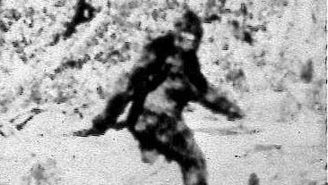 """Photographers Roger Patterson and Bob Gimlin made this image Oct. 20, 1967, purportedly showing a female Bigfoot, during a horseback search in northern California for Sasquatch or """"Bigfoot"""". Now, four magnified frames of the 16 mm footage show tracings of a bell-shaped fastener at Bigfoot's waist and after decades of doubt, some enthusiasts say the creature in the so-called Patterson-Gimlin Film can finally be dismissed as a man in a monkey suit."""