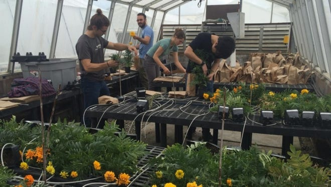 Andrew Margenot and others found that biochar can replace peat moss in marigold production with no adverse effects.