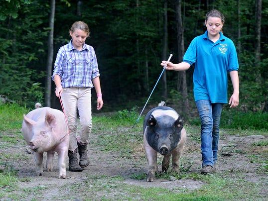 DOMINANT_SA_4H_Pigs_01.jpg