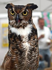 Meet some of our fine feathered friends at Owl-O-Ween
