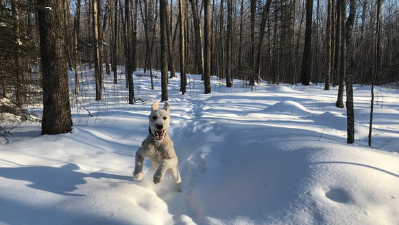 Henry's joy at running through the woods is infectious.