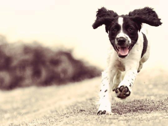 canine.jpg