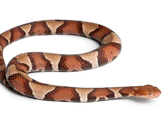 Pennsylvania woman bitten by venomous copperhead snake while doing laundry