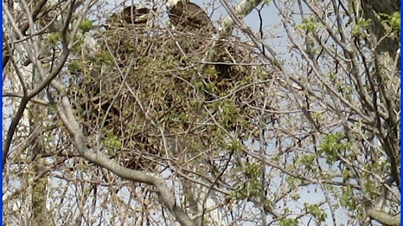 Zoomed in photo of Eagle Nest while standing on Springettsbury Township section of Heritage Rail Trail (S. H. Smith, 2015)