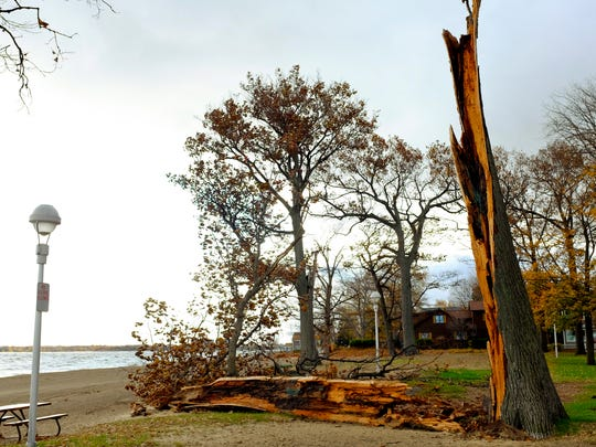 A large tree was split from high winds at Lakeside Beach in Port Huron.