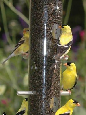 Wild Birds Unlimited ad