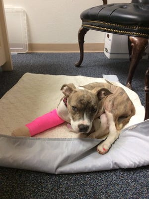 Maggie Grace, a 4-month-old puppy, is undergoing several surgeries after authorities say she was brutally beaten by her previous owner.