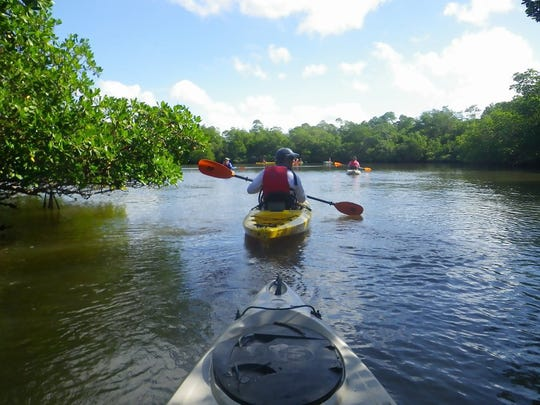"Kayakers follow a trail through the estuary. Rookery Bay offers kayak tours through the mangrove tunnels and islands to learn more about our ""backyard."" Lance Shearer/Eagle Correspondent"