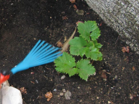 ARN-gen-gardening.jpg