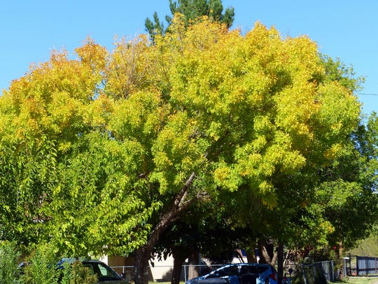 One tree shows the gradation from green to gold to