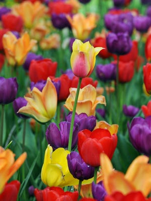 Protect newly planted tulips and other bulbs.