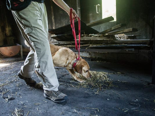 Watch: Arson dogs come to Evansville Fire Department for ...