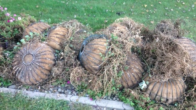 """A growing heap of the season's hanging baskets are retired in a """"bottoms up"""" position, awaiting clean-up."""