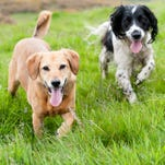 Counting tails: Towns hold dog censuses