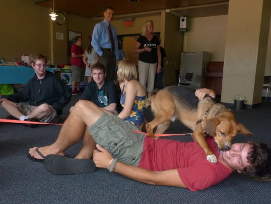 Canine Comfort 1.jpg