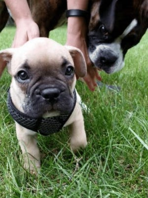 A new West Allis dog park, near 111th Street and West Hayes Avenue, is set to open Dec. 14. It will be the city's first dog park.