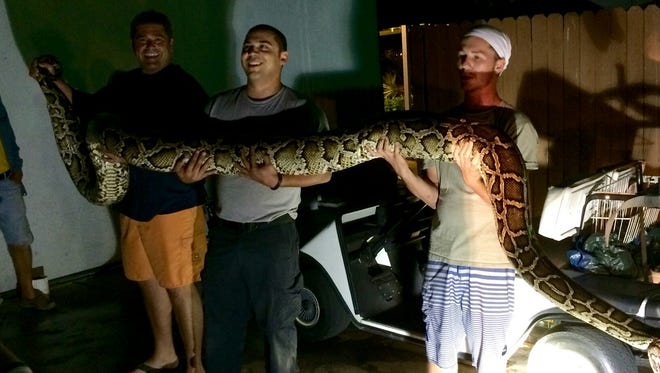 15-foot Python found on Isles of Capri in Collier County.