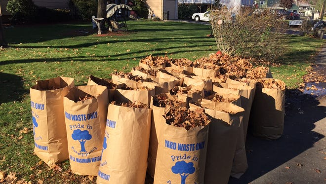 Bags full of leaves ready for pickup in Parsippany.