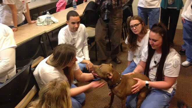 Students in Our Lady of Lourdes School of Nursing pet therapy dog Aladdin, who helped them relieve stress on Thursday.