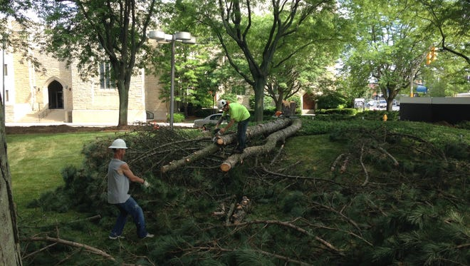 Contractors saw up one of the trees being cut down at Ivy Tech Community College's Fisher Building in downtown Muncie.