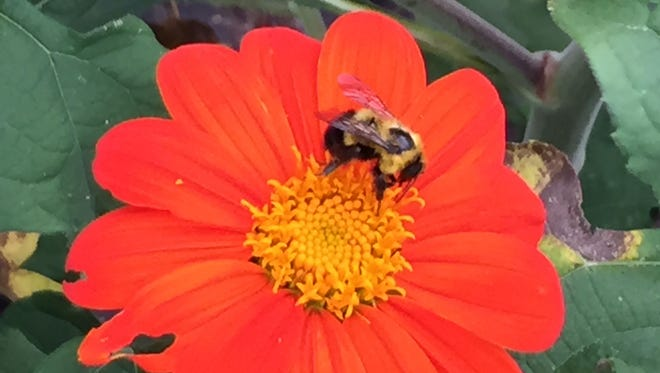Pollinators are needed to produce our favorite foods. Everyone, no matter the size of the lot, can help.