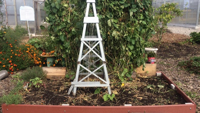 Remove your trellis and other structures in your garden in the fall, and clean them before storage.
