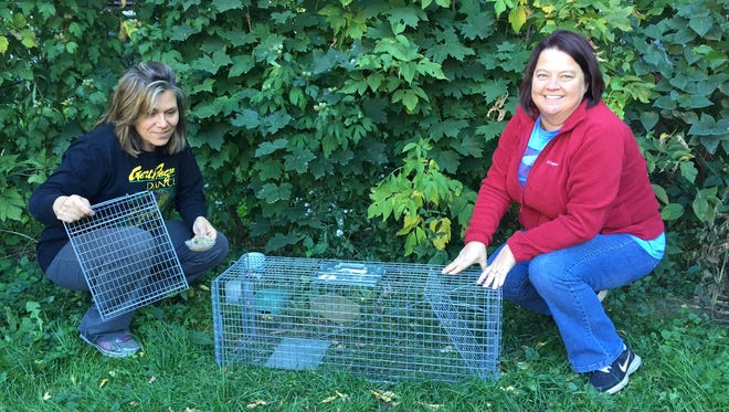 Robin Glenski, left, and Sheri Tehan, set a cat trap in Rochester's 19th Ward. They are part of a group, 19th Ward Community Cats, that traps, sterilizes and vaccinates feral cats in order to reduce the neighborhood's feral cat population.