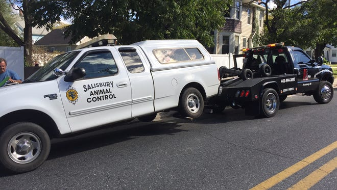 A feisty chihuahua remained on the loose when a City of Salisbury Animal Control van en route to apprehend the animal collided with a motorist at Church and Truitt streets on Friday, Oct. 21. Neither the driver of the city van nor the other motorist or his infant daughter in the car with him required medical attention, officials said.