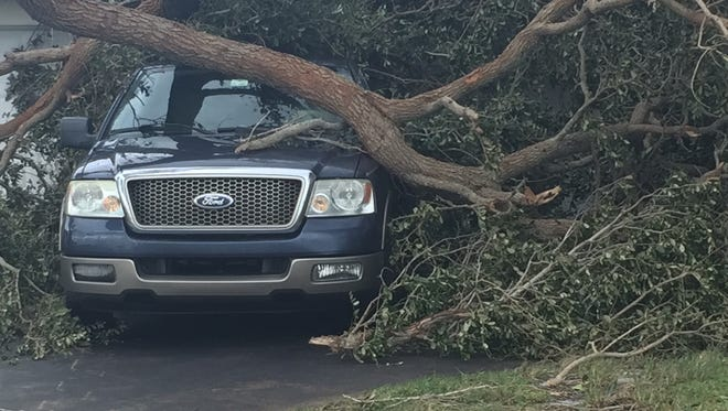 A truck under a fallen tree on Pineapple Avenue in Melbourne after Hurricane Irma.