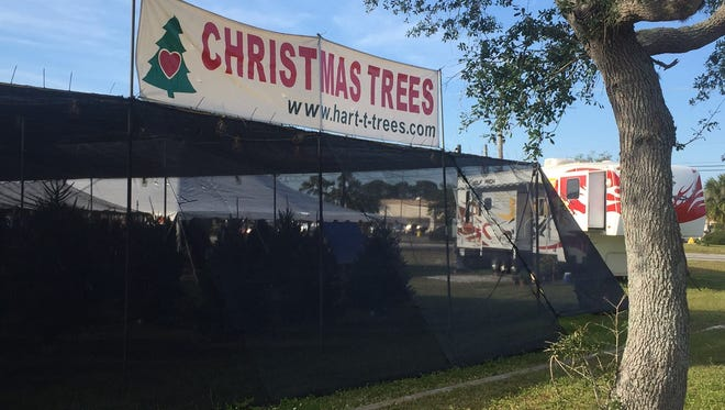 A popular Christmas tree lot at Apollo Boulevard and Sarno Road will likely move next year to another spot in the shopping plaza where owners have set up shop for 25 years or longer.