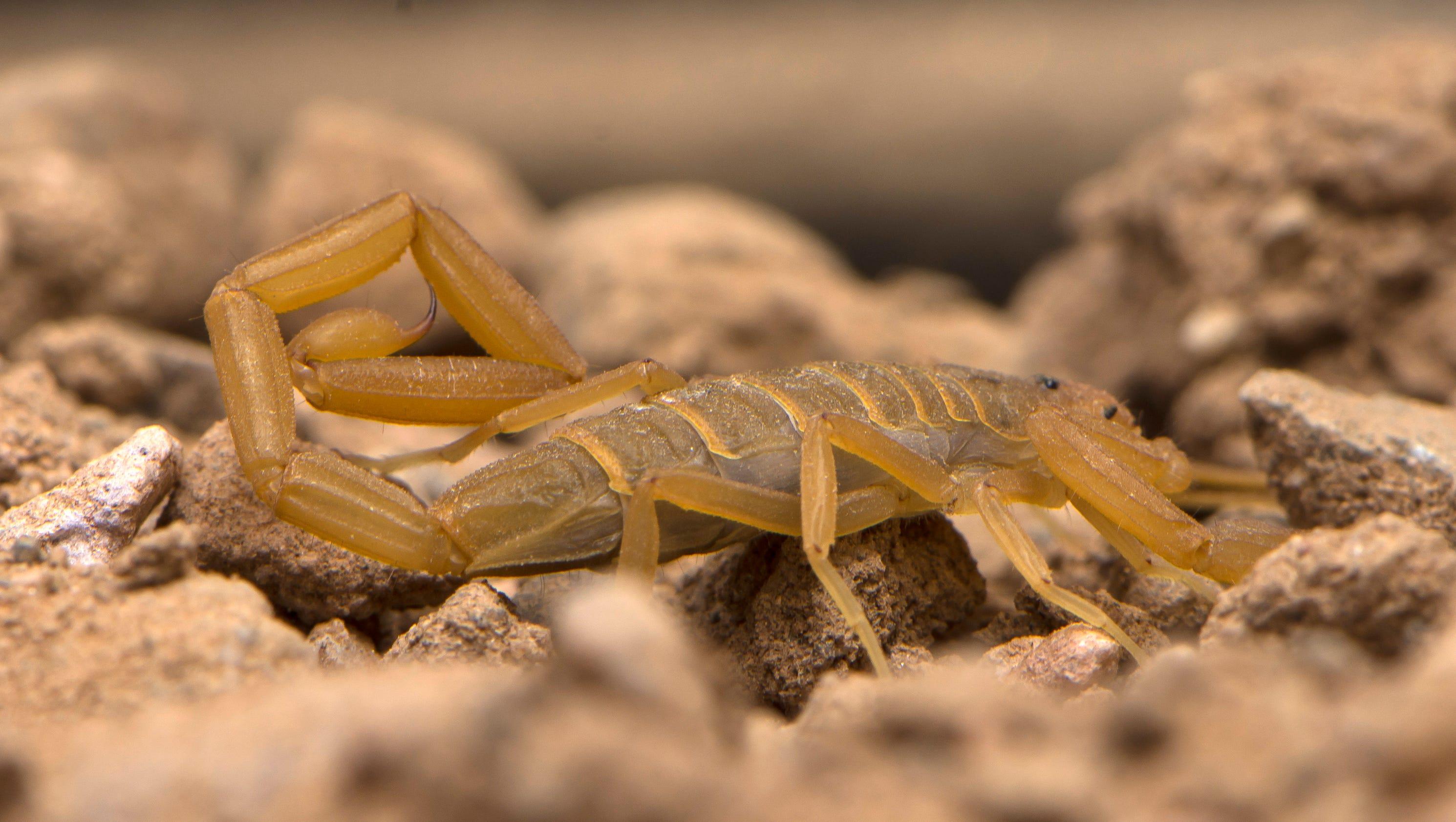 eww arizona u0027s creepiest crawliest inhabitants explained