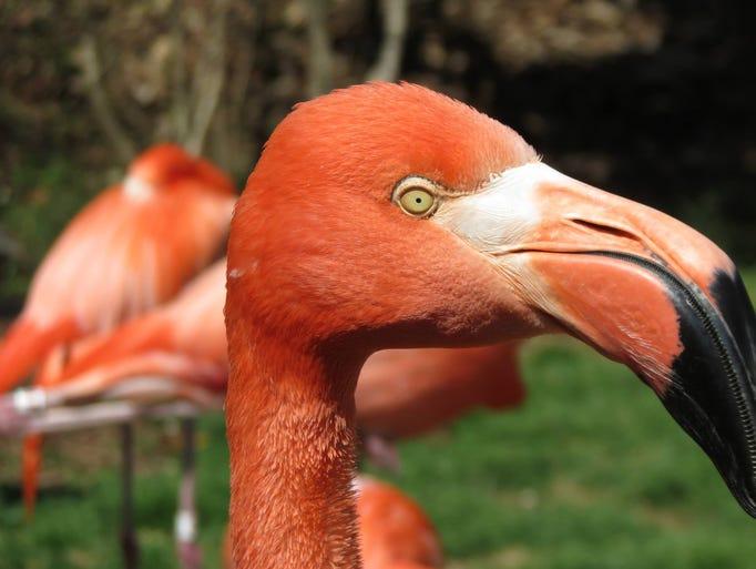 Guest visiting the Nashville Zoo's Flamingo Lagoon