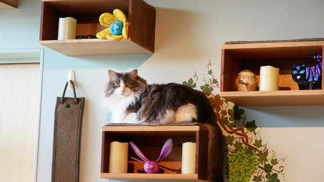 Custom-built boxes provide storage and vertical space for a cat.
