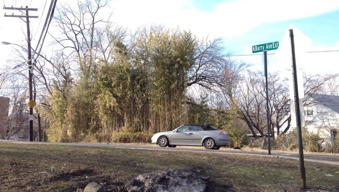 Village officials are considering a ban on new bamboo plantings in Mamaroneck. The aim is to avoid situations like this, where a stand of bamboo towers over North Barry Avenue Extension.