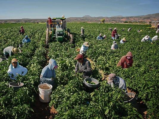 Saving Green Chile