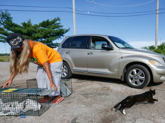 Sylvester, a feral cat living in the former homeless camp near Walmart on Kearney Street, bolts from his cage as he is released by Joy Burk on Friday, June 16, 2017. Burk captured Sylvester and had him neutered at SAAF.