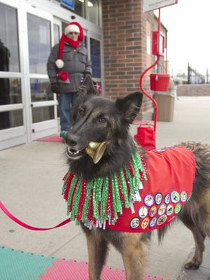 Magic Genie rings a bell that is held in her mouth or knocks smaller sleighbells mounted to a stand with her front paw to inspire donations to the Salvation Army at the Genoa Township Walmart.