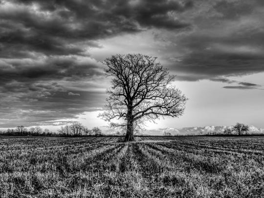 """""""Eye in the Sky. """"While traveling south looking for interesting shots,"""" says Regna, """"I came upon this solitary tree in East Bloomfield .... Directly to the left of the top portion of the tree is what appears to be an eye. It was very serene being in this field, almost as though there was a 'presence.'"""""""