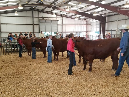 Prize winning Livestock on display at the 2017 Lincoln