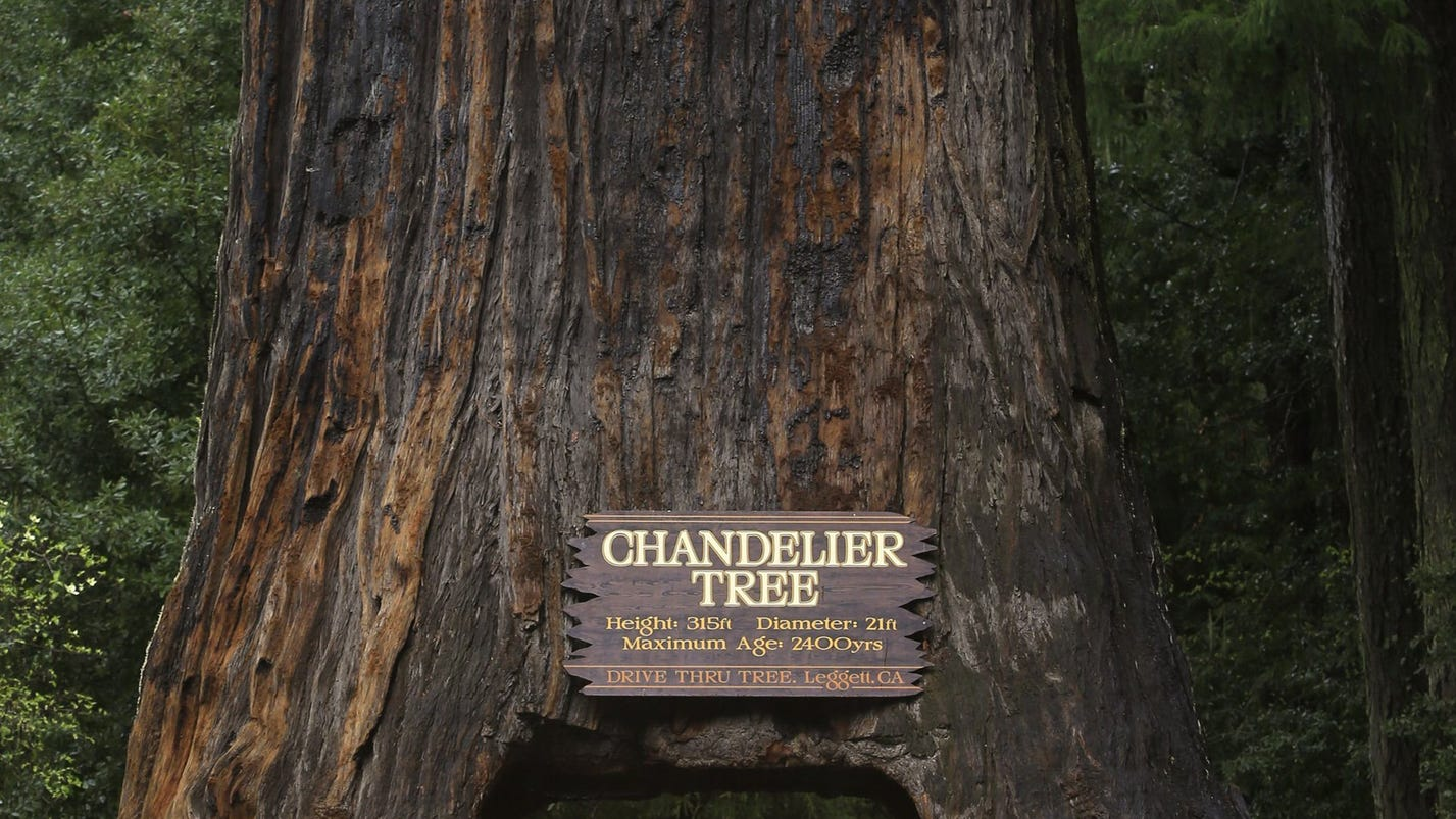 Leggett in the land of the redwood giants arubaitofo Images