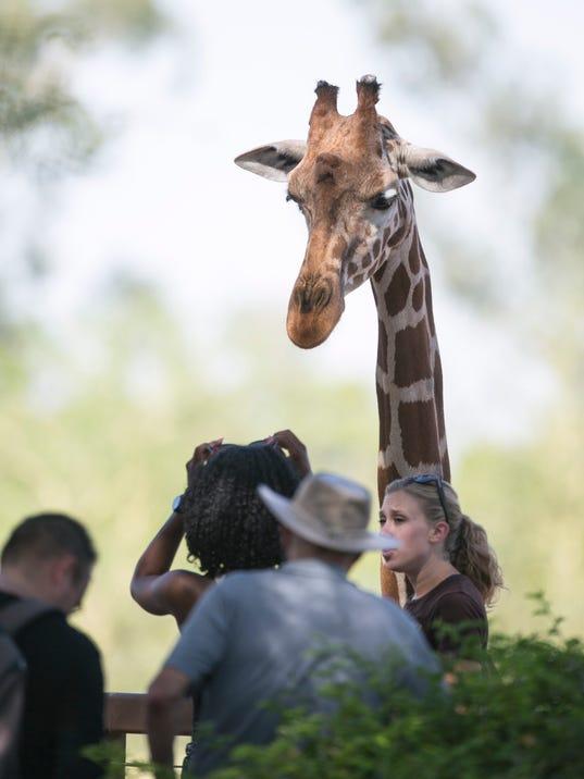 Phoenix Zoo giraffe