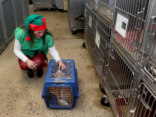 Dressed as an elf, Toni Hoffman of Bridgewater, keeps Othello, a cat,  company before it is transported to its new home in South Bound Brook. Santa Claus and an elf, staff members with St. Hubert's in Branchburg, delivered pets to adoptive families. The families, in South Bound Brook and Hillsborough, requested the special Christmas Eve delivery. Mary Iuvone/For The Courier News