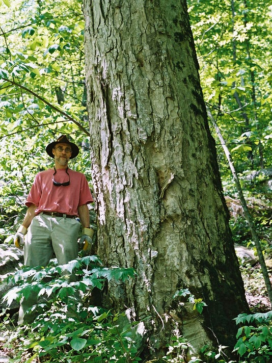 636491885472658959-Conserving-Carolina-John-Myers-at-Giant-Oak-on-Wildcat-Rock-Trail---photo-by-CC.jpg