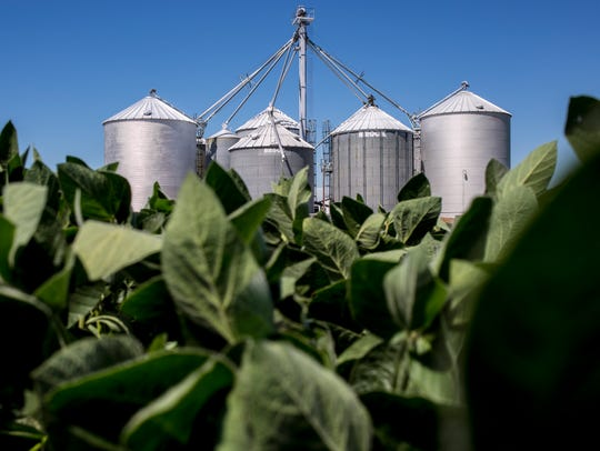 A grain elevator is seen rising above a field of soybeans