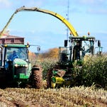 Workers from Kane Farms harvest corn Oct. 21 in the town of New Denmark.