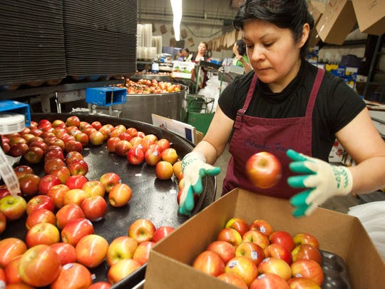 A worker packs Fuji apples at Columbia Fruit Packers in Wenatchee, Wash.